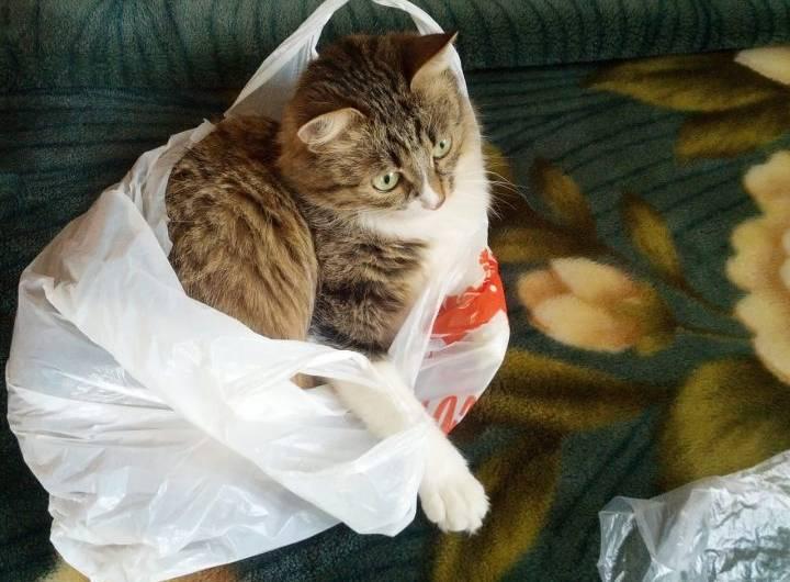 La meilleure poussette pour chat en 2019 – Comparatif, guide et avis 20