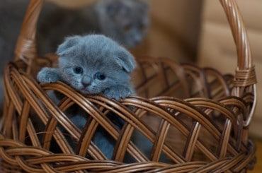 Le meilleur panier pour chat en 2019 – Comparatif, guide et avis 2